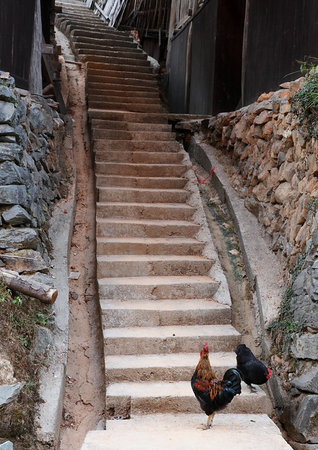 Stairway - What will waiting for me at the top?, Guangxi, China
