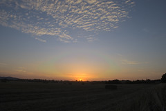 Sunset_3 (Kev Pugh) Tags: sunset horse silhouette landscape countryside nikon nikond80