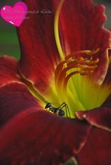 El 4 de febrero es el Día Mundial contra el Cáncer. (-Ana Lía-) Tags: naturaleza amigos color macro luz nature argentina nikon flor lucha fotografía prevención grillo suerte mardelaspampas díamundialcontraelcáncer aprehendiz