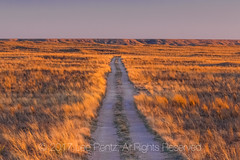 Road through Shortgrass Steppe Prairie at Dawn in Eastern New Mexico (Lee Rentz) Tags: lesserprairiechicken newmexico prairiechicken tympanuchuspallidicinctus america americanwest courtship dawn dirt display distance distances early expanse glow golden grass grasses grassland gravel habitat horizon landscape lane lek leks light location middlegrass mixedgrass morning nature northamerica oilpatch open outdoors prairie range rangeland remote remoteness road route sand shortgrass shortgrasssteppe sky southwest spread sun sunlight twotrack unitedstates usa vast vastness west wild