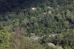 Isola (lincerosso) Tags: bosco collina abitazione paesaggio landscape maredalberi tonalitàdiverde selvatico natura bellezza armonia estate arfanta