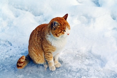 Cat (hk_traveller) Tags: trip travel vacation white snow color japan cat canon photo asia hokkaido traveller turbo   otaru turbophoto