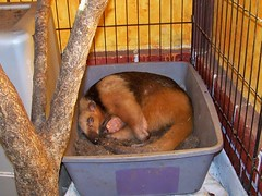 Sleeping in his dirt box