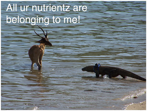 all ur nutrientz2
