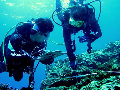 基翬擁有豐富的珊瑚礁生態,是「台灣珊瑚礁總體檢」的監測點之一。
