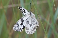 M-10 (cadiyo) Tags: mariposas fzfave httpwwwflickrcomphotostagsmisionfez100601 misionfez100601