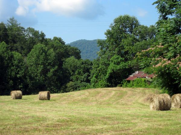 fresh-cut-hay