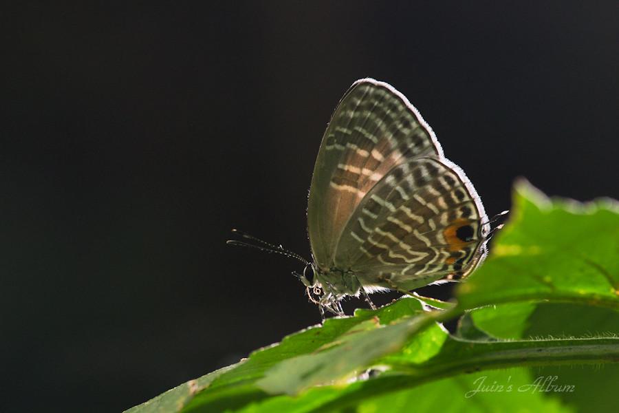 6/29 富陽 只有一隻蝶