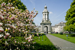 Trinity College Dublin Campanile (Dave G Kelly) Tags: ireland dublin tree college architecture canon university arch path historic campanile trinity cherryblossom canon5d trinitycollegedublin dublincity tcd canoneos5d sigma2470mm skytrail sigma2470mmf28exdgmacro dublinphotographer davegkelly copyright2010davegkelly gettyimagesirelandq1