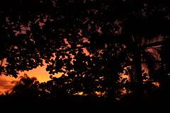 entardecer entre as folhas (kaleonel) Tags: folhas prdosol tarde rvores entardecer alaranjado karenleonel kaleonel