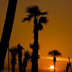 Sunset with Palm Trees and Sailboat Mast (raisinsawdust - (aka: tennphoto)) Tags: ocean sunset vacation orange beach palms nikon surf florida dusk palmtrees summervacation 2010 floridavacation sunshinestate d90 amazinglight colorphotoaward nikond90 gettyvacation2010