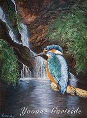 wildlife illustration (Yvonne Gartside) Tags: bird art nature illustration work idea design drawing wildlife yvonne kingfisher concept gartside