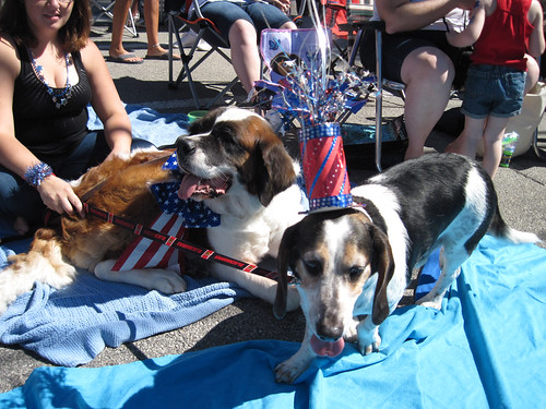 Dogs Watching Parade