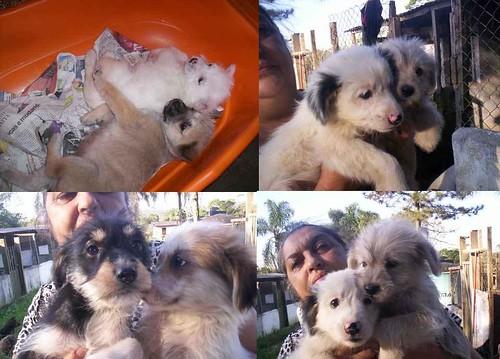 Filhotes de cachorros doados pelo Jardim