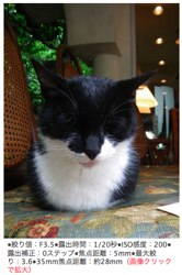 Pentax W60 cat photo at 28mm
