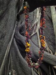marigold garland on strangler fig (goatsfoot) Tags: world park flower tree heritage wet forest warning religious rainbow rainforest mt strangler fig australia garland national nsw trunk np northern subtropical region marigold banyan schlerophyll