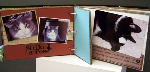 Cat Mini Book