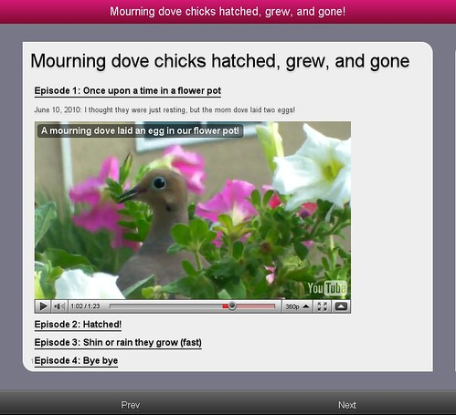 mourning-dove-page