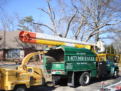 "Falls Tree Service • <a style=""font-size:0.8em;"" href=""http://www.flickr.com/photos/51993051@N08/4781108417/"" target=""_blank"">View on Flickr</a>"