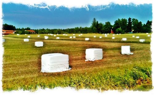 giant sugar cube heaven