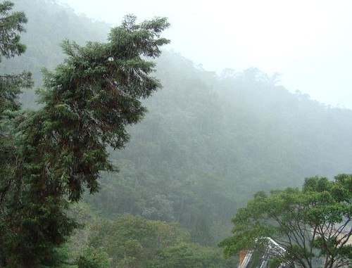 Domingo de chuva fina...