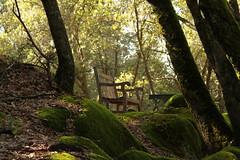 Emptiness (skipwrope) Tags: friends favorite forest bench cabin woods friend dad quiet empty father grandfather peaceful grandpa greens serene tribute emptiness sentimental woodsy yosemtie skipwrope