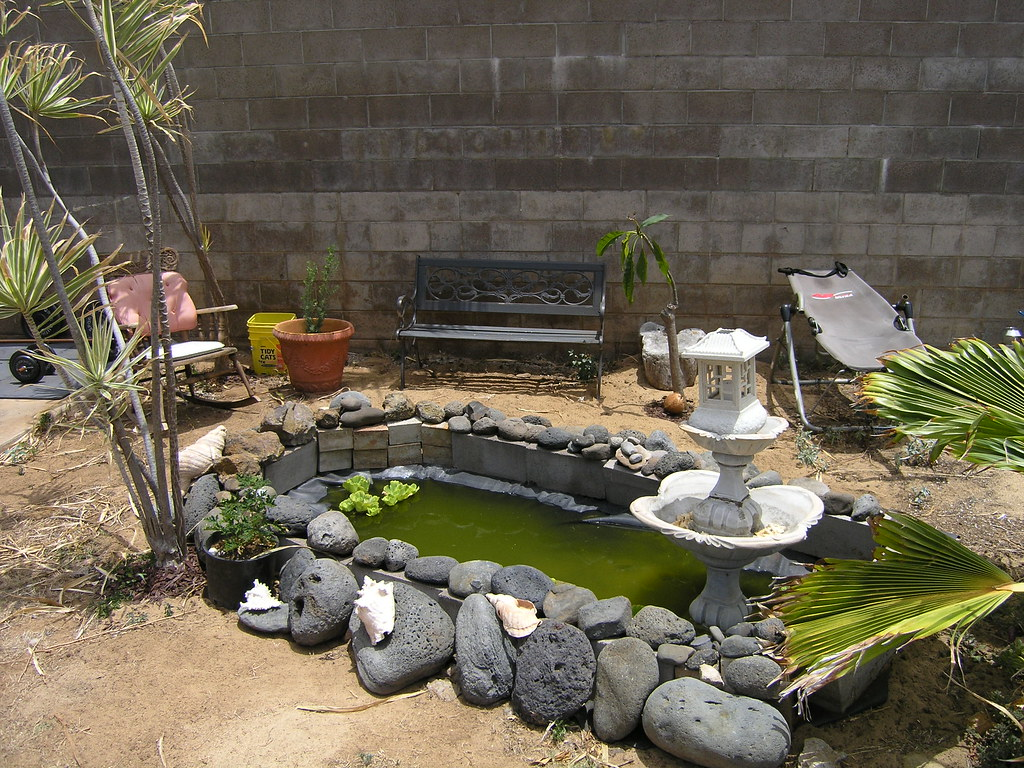 918 H Backyard Turtle Pond