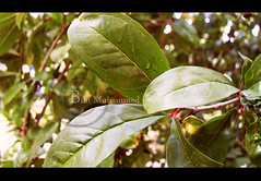 12.O7.1O (Bint Muhammed ) Tags: camera morning tree green leave water rain plante keys highway key day slow forum   muhammed bint                  ta7a qnadel