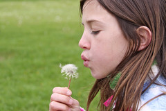 Brunette girl makes a wish on a dandelion (annemconnor@yahoo.com) Tags: nature girl childhood happy hope child natural innocent blowing dandelion brunette youngster optimism wishing makeawish dandelionseed