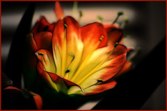 Orange Flower (Brian 104) Tags: light orange flower artist artizen fractalius