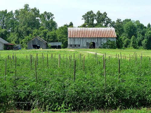 第10周的Clagett Farm份额