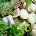 Palm heart mustatd salad / Ensalada de palmitos