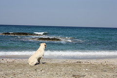 Waiting for Odysseus (Pavlos..) Tags: travel beach water coast greece animalplanet kalamos eyboia waitingforodysseus