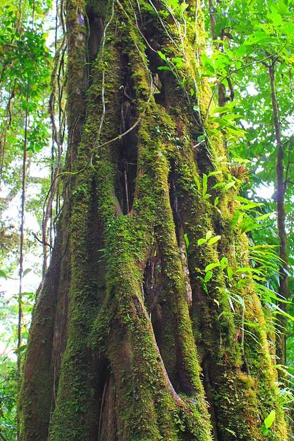 tree trunk b