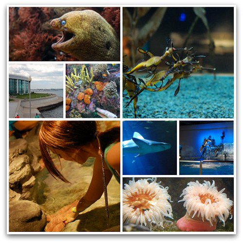 Shedd Aquarium collage