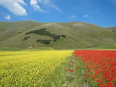 Italy (filippo rome) Tags: flowers italy colors umbria 2010 castelluccio fioritura
