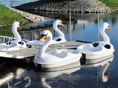 The Fleet Is In (ConanTheLibrarian) Tags: park summer lake pier boat swan pond nebraska swans paddleboat kearney citypark paddleboats buffalocounty
