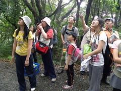 盧堅富老師帶領下,志工們觀察五色鳥的鳥巢