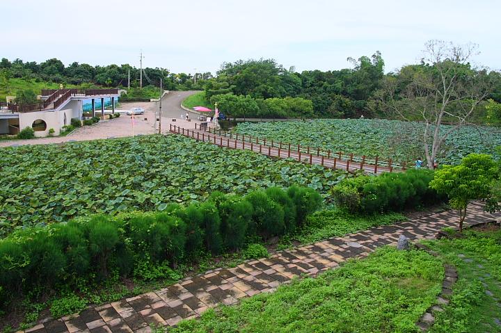台南白河蓮花公園(水連公園)0019