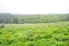 meadows (parth joshi) Tags: tabo ki himachalpradesh kinnaur kaza chandratal mulling batal kibber kimonastery tabomonastery recongpeo chattru trekkinginhimachal spititvalley kunzumpas bhabhapass