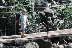 Swinging Bridge Photo