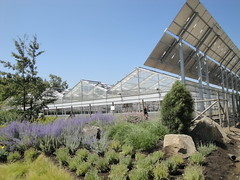 Blooming Greenhouses with Solar Panels