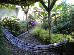 Hammock under grape arbor