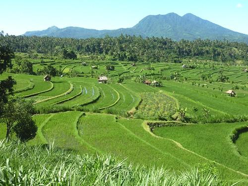 Bali-Tirtagangga (34)