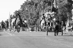 Horsey Parade (Kid Gibson) Tags: blackandwhite horse canon utah parade cart shetland nephi tamaron t1i