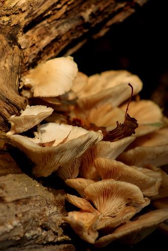 Fungi DOF by Brian Cox