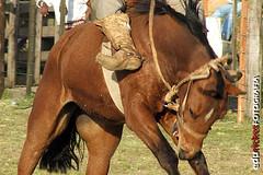 "Esporeando o ""sangrador"" (Edu Rickes) Tags: horses animal speed de foto action ao rodeo cavalos pelotas edu cavalo gauchos semana riograndedosul eduardo rodeio rickes fotogrficas esporas farroupilha jineteada produes moradadosol tradiogacha fotgrafosbrasileiros brasil2014 fotgrafosgachos rodeiogacho gineteda brazilianphotografers esporeando"