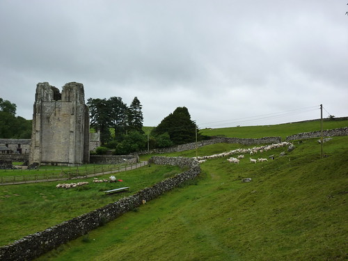 Shap Abbey and sheep being hearded