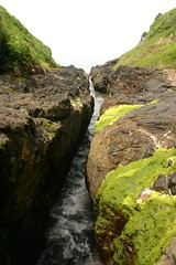 The Devil's Churn goes green (CM Sims) Tags: ocean sea people oregon nw pacific or sealife coastal pacificnorthwest tidepool tidal marinelife coastaloregon thedevilschurn