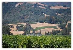 California Hills in August (Aqua0646 (Pat)) Tags: california landscape august hills vineyards
